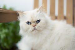 Gato real Imagens de Stock