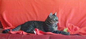 Gato real Imagen de archivo