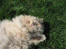 Gato receoso Imagem de Stock Royalty Free