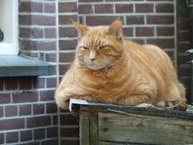Gato rechoncho enojado Imágenes de archivo libres de regalías