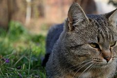 Gato relajante Imagen de archivo