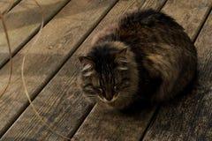 Gato Relaxed Foto de Stock Royalty Free