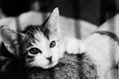 Gato Relaxed Fotografía de archivo
