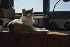 Gato retroiluminado imagen de archivo