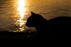 Gato retroiluminado de la silueta Imágenes de archivo libres de regalías