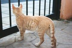 Gato rojizo Foto de archivo libre de regalías