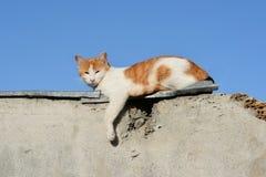 Gato rojo Imagenes de archivo