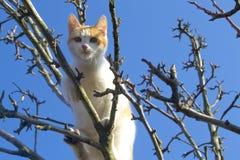 Gato rojo Fotografía de archivo libre de regalías