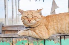 Gato rojo Imágenes de archivo libres de regalías
