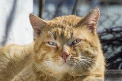 Gato rojo brutal de la calle imágenes de archivo libres de regalías