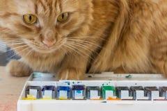 Gato rojo curioso Imagen de archivo libre de regalías