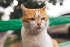 Gato rojo de la calle que presenta en un banco viejo Imagenes de archivo