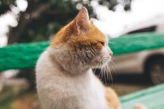 Gato rojo de la calle que presenta en un banco viejo Foto de archivo