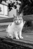 Gato rojo de la calle que presenta en un banco viejo Fotografía de archivo libre de regalías