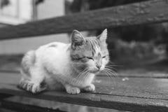 Gato rojo de la calle que presenta en un banco viejo Fotografía de archivo