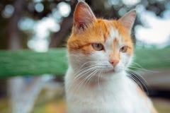 Gato rojo de la calle que presenta en un banco viejo Fotos de archivo