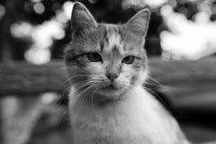 Gato rojo de la calle que presenta en un banco viejo Imagen de archivo libre de regalías