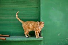 Gato rojo del pelo Fotos de archivo libres de regalías
