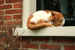 Gato rojo del pelo Foto de archivo