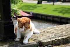 Gato rojo del pelo Fotografía de archivo