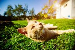 Gato rojo divertido imagen de archivo