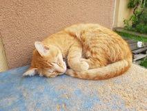 Gato rojo el dormir Fotos de archivo