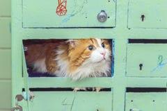 Gato rojo en buzones Imagenes de archivo