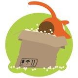 Gato rojo en caja Imágenes de archivo libres de regalías