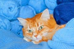 Gato rojo en cuerdas de rosca azules Fotografía de archivo libre de regalías