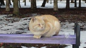 Gato rojo en el banco Imagenes de archivo