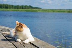 Gato rojo en el embarcadero, dormido, contra el lago azul imágenes de archivo libres de regalías