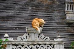Gato rojo en el fondo de una casa vieja de madera Foto de archivo