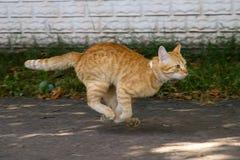 Gato rojo en el salto Imagen de archivo