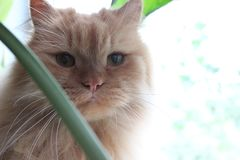 Gato rojo en la ventana Imagen de archivo libre de regalías