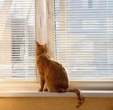 Gato rojo en la ventana en primavera imagenes de archivo