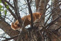 Gato rojo en un árbol fotos de archivo libres de regalías