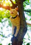 Gato rojo en un ?rbol Animales divertidos fotos de archivo