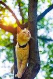 Gato rojo en un ?rbol Animales divertidos fotografía de archivo libre de regalías