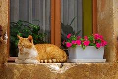 Gato rojo en un travesaño de la ventana Foto de archivo libre de regalías