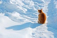Gato rojo en una nieve Foto de archivo libre de regalías