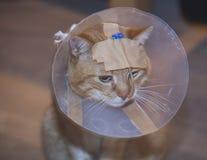 Gato enfermo con el cono y el tubo Imagenes de archivo