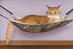 Gato rojo grande que miente en la hamaca Imagen de archivo