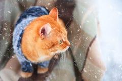 Gato rojo hermoso en un suéter hecho punto al aire libre Imagen de archivo