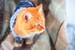 Gato rojo hermoso en un suéter hecho punto al aire libre Fotos de archivo libres de regalías