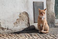 Gato rojo II Imágenes de archivo libres de regalías