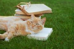 Gato rojo lindo con el libro abierto y los vidrios que mienten en césped verde foto de archivo