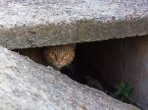 Gato rojo perdido que mira a escondidas de la raja Imágenes de archivo libres de regalías