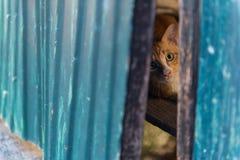 Gato rojo que miente en la madera Foco selectivo Foto de archivo libre de regalías