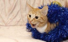 Gato rojo que mira a escondidas de la malla imagen de archivo libre de regalías