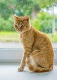 Gato rojo que se sienta en la ventana Foto de archivo